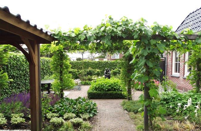 Buitenwen Tuinontwerp Heemskerk Beplanting Klimplanten