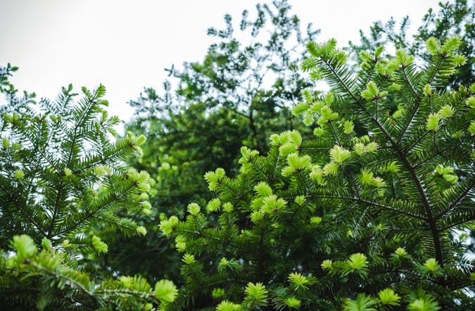 Buitenwen Tuinontwerp Heemskerk Beplanting Vaste Planten