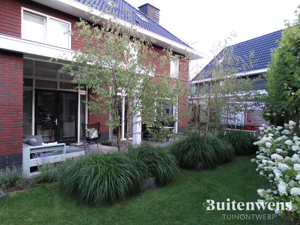 Witte hortensia en witte berk Buitenwens Tuinontwerp Heemskerk
