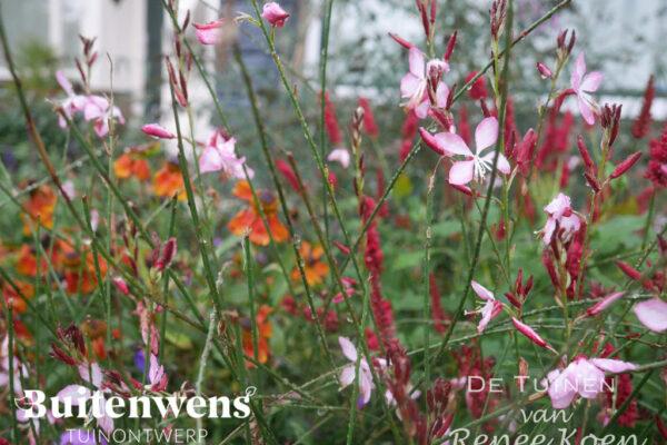Buitenwens-Tuinontwerp-Heemskerk-Metamorfose-Bloemenpracht