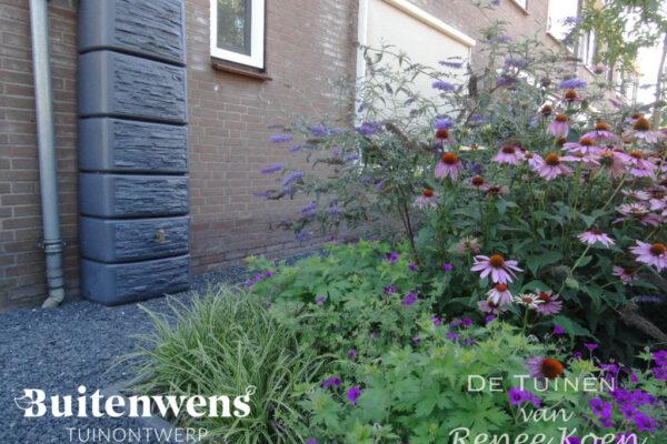 Buitenwens-Tuinontwerp-Heemskerk-Metamorfose-Duurzame-Tuin-Regenton