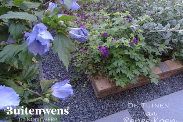 Buitenwens-Tuinontwerp-Heemskerk-Metamorfose-Hibiscus