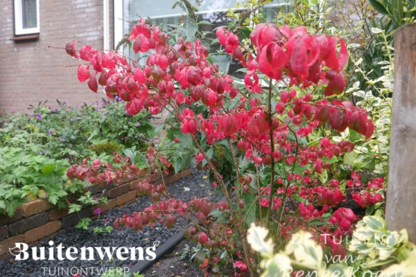 Buitenwens-Tuinontwerp-Heemskerk-Metamorfose-Rode-Kornoelje